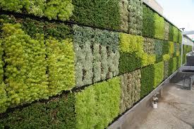 Muro com folhas