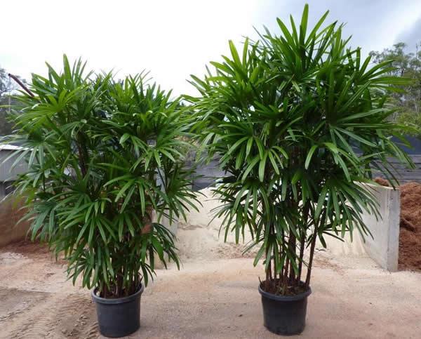 10 plantas especiais para jardim de inverno for Plantas para macetas grandes de exterior