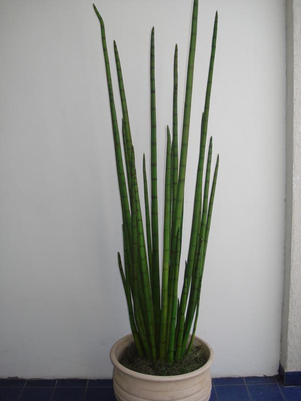 Planta 4