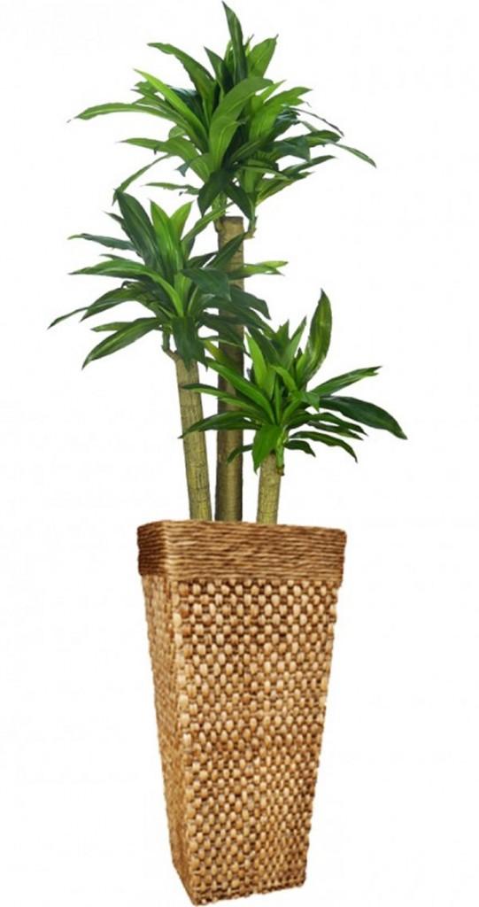 Planta 5