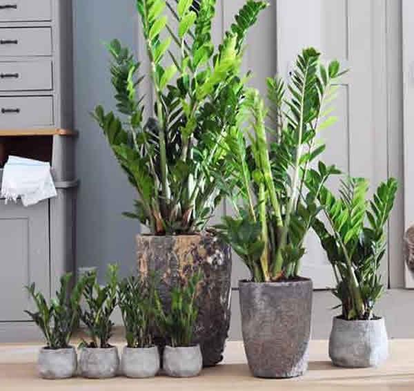 Planta 7