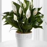 10 plantas especiais para jardim de inverno