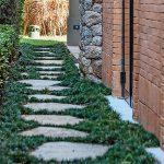Grama Preta – Preços, cuidados e como plantar