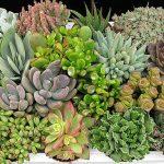 Plantas Nativas do Cerrado: Como cuidar e plantar