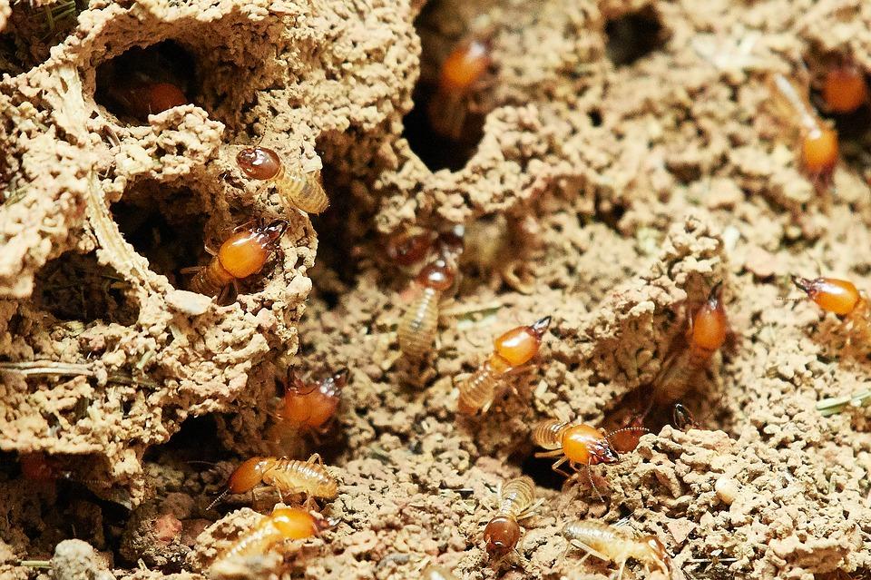 como se livrar de cupins traças e formigas