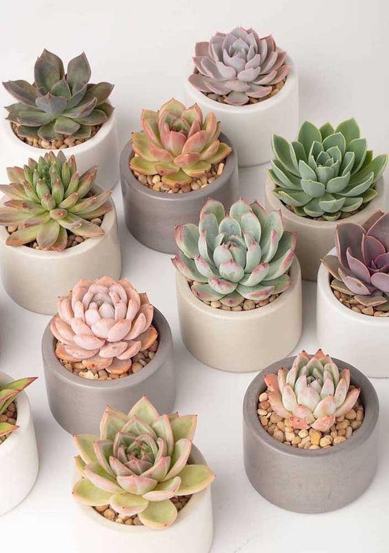 tipos de planta para ter dentro de casa