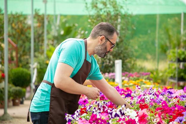 Canteiro para flores em casa